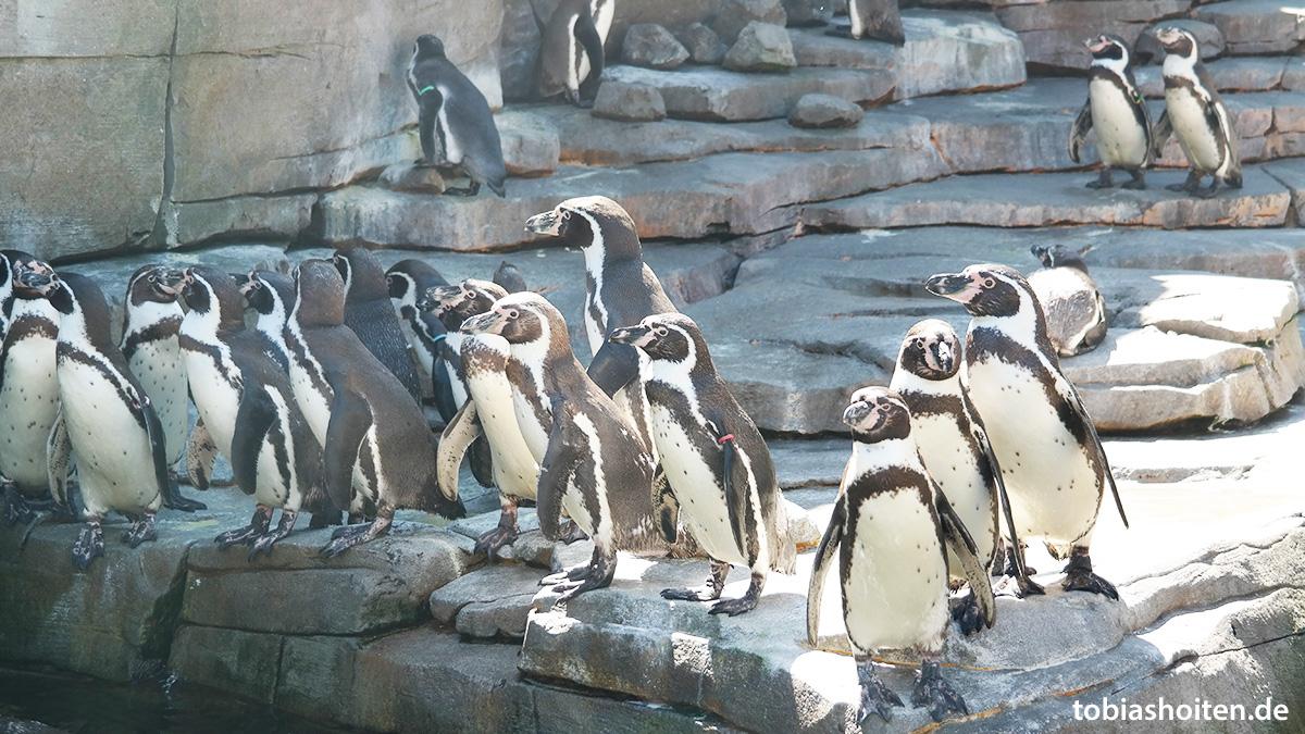 Tierpark Hagenbeck Tobias Hoiten