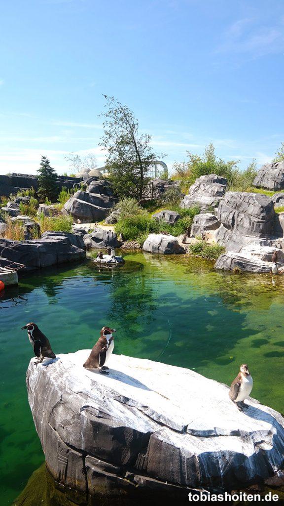 Wildlands Adventure Zoo Emmen Tobias Hoiten