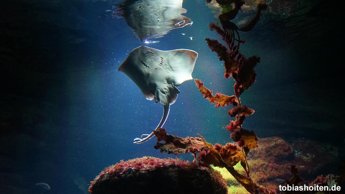 bremerhaven-zoo-am-meer-tobias-hoiten-8
