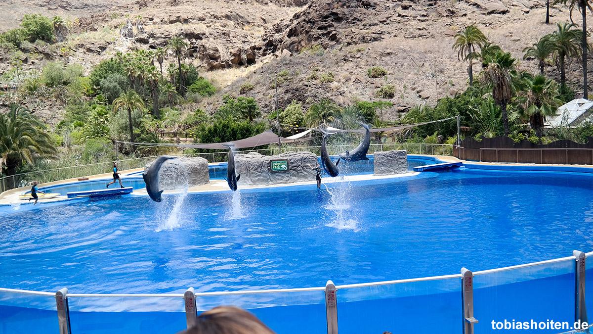 Palmitos Park Delfinshow Tobias Hoiten
