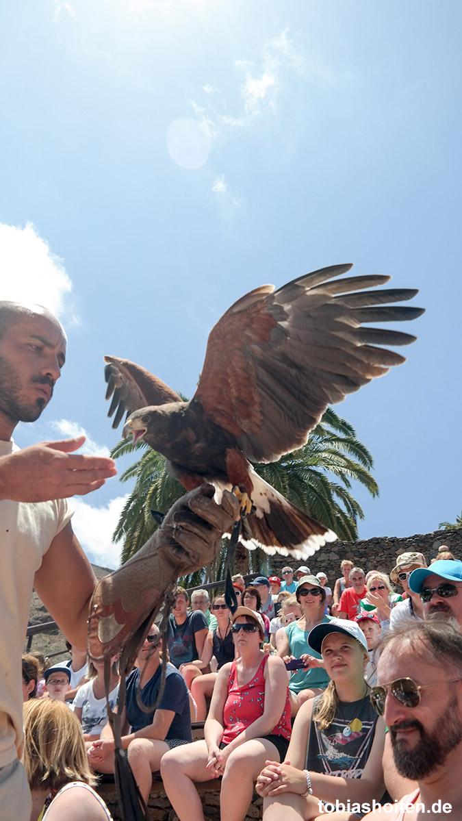Palmitos Park Gran Canaria Greifvögel Show