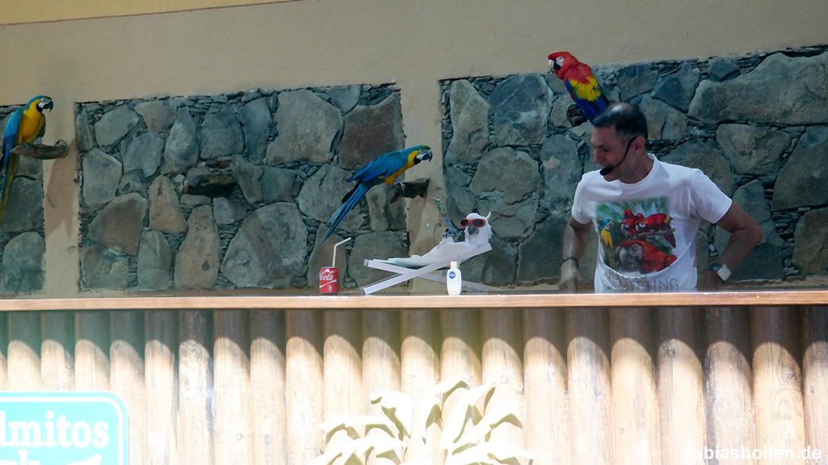 Palmitos Park Papagei Show Tobias Hoiten