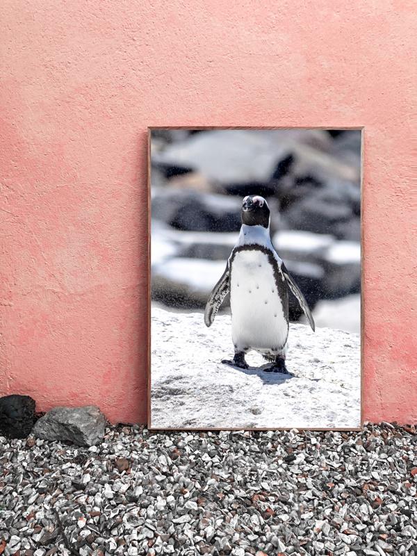 wandbild-pinguin-tobias-hoiten-3